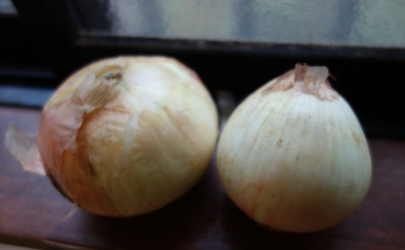 新たまねぎ塩麹の作り方☆