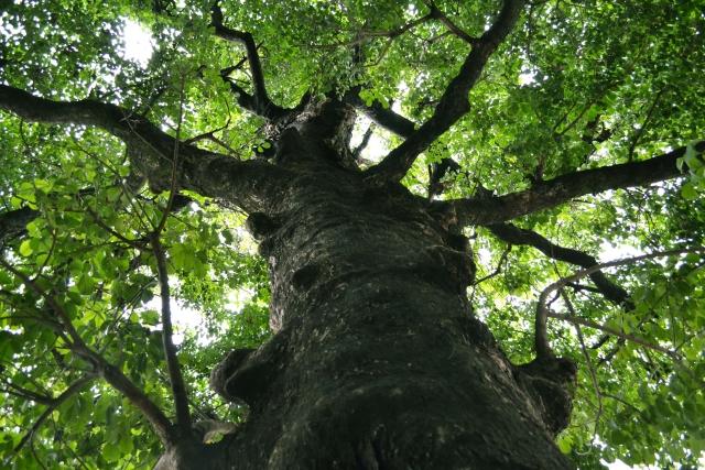 【ご案内】9/27(木)お母さんのためのプチリトリート@多摩の里